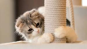 rascador de gatos